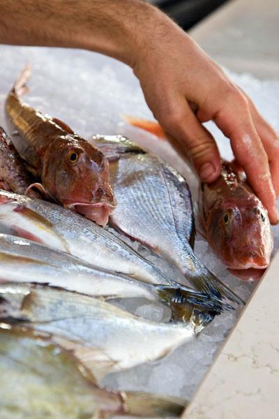 La pescheria in allestimento